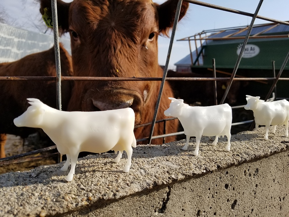 cows-with-real-cow_sized.jpg
